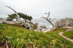 Stora stenblock med ett twisty cyprussträd längs den steniga kustlinjen av Kalifornien nära Monterey och Big Sur, på ett dystert  royaltyfri fotografi