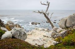 Stora stenblock med ett twisty träd längs den steniga kustlinjen av Kalifornien nära Monterey och Big Sur, på en dyster mulen dag royaltyfria bilder