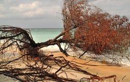 Stora stupade träd och absolut i havet. Royaltyfria Foton