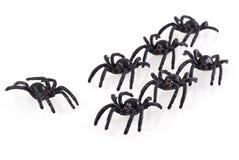 stora svarta spindlar Fotografering för Bildbyråer