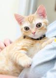 Stora synade Kitty Cat Seymore Beanie Boo royaltyfri fotografi