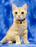 Stora synade Kitty Cat Seymore Beanie Boo royaltyfri bild