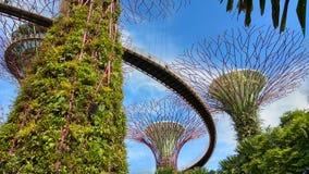 Stora toppna träd för Singapore botanisk trädgård i Singapore arkivbild