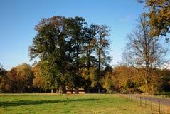Stora träd i holländskt landskap Arkivfoto