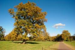 Stora träd i holländskt landskap Royaltyfri Bild