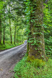 Stora träd inramar en landsväg i Smokey Mountain National Park Arkivbild