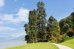 Stora träd på det härligt parkerar av villan Melzi längs sjön Como fotografering för bildbyråer