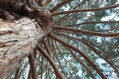 Stora trädfilialer Arkivfoton