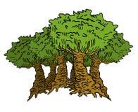 stora trees Arkivbild