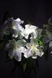 Stora vita liljor bukett lighting petals Blommor stamens Fotografering för Bildbyråer