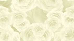 Stora vita rosa knoppar faller ner, öglasbakgrund vektor illustrationer