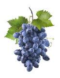 Stora våta blåa druvor samlar ihop och sidor som isoleras på vit Arkivbilder