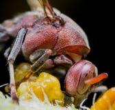 Stora Wasp på tunn filial i vår Royaltyfri Foto