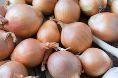 Storage area onion and garlic Stock Image