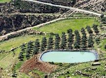 Storage basin for the irrigation of an olive grove in the desert near Karak, Jordan stock photo
