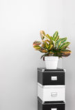 Storage boxes and green plant in a room corner. Black and white storage boxes and green plant in a room corner stock photography