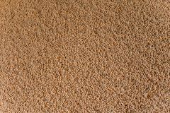 Storage, processing of grain beans. Storage, processing of grain agriculture Stock Photos