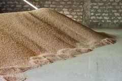 Storage, processing of grain beans. Storage, processing of grain agriculture Royalty Free Stock Images