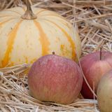 Storage of pumpkin and apples. Beautiful yellow-orange striped pumpkin and apples on the hay royalty free stock image