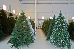 Storage room with artificial Christmas trees Stock Photography