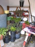 A storage room for overwintering plants Stock Photo
