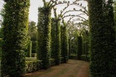 Storartad båge av propra buskar som göras i form av en korridor arkivfoton