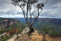 Storartad eukalyptusträd på den Burramoki udden som förbiser Grose V royaltyfri fotografi