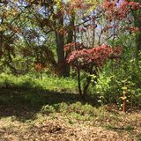 Storartad grön egenskap i Anne Arundel County i Maryland arkivbild