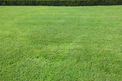 storartad grön lawn royaltyfria foton