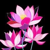 Storartad illustration av härliga lotusblommor Royaltyfri Foto