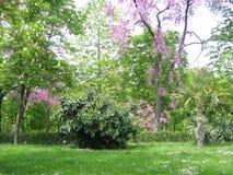 Storartad trädgård i Madrid, Spanien royaltyfri foto