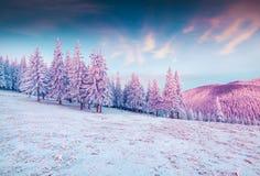 Storartad vintersoluppgång i Carpathian berg med snöcovere Arkivbild