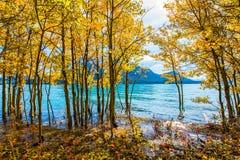 Storartade Abraham Lake i en flod Arkivbild