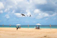 Storartade Frigatebird som flyger över folk på Praia da Conceicao Beach - Fernando de Noronha, Pernambuco, Brasilien Royaltyfri Bild