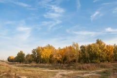 Storartade nedgångträd och den blåa himlen Arkivbild