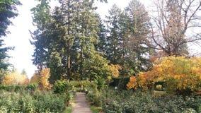 Storartade träd Royaltyfri Fotografi
