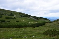 Storartat berg med kor Royaltyfri Bild