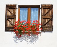 Storartat blomningfönster med krukor av pelargon fotografering för bildbyråer