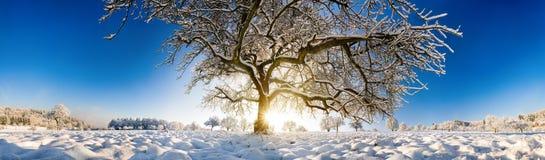 Storartat panorama- vinterlandskap med ett stort träd i snö arkivbild