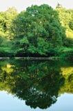 Storartat träd reflekterat in i floden av Lay arkivbild