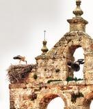 Storch über Nest Lizenzfreie Stockbilder
