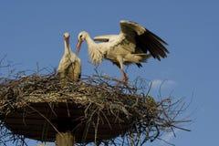 Storch - Lizenzfreie Stockbilder