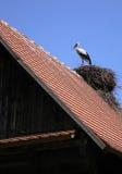 Storch auf dem Dach Stockbild
