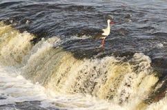 Storch auf dem Wasserfall lizenzfreie stockfotos
