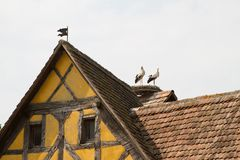 Storch auf einem Dach des Fachwerk- Hauses in einem Dorf in Elsass Lizenzfreie Stockfotos