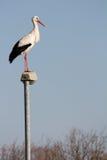 Storch auf einer Lampe Stockfoto