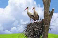 Storch auf Flügel Stockfotografie