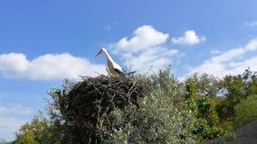 Storch auf sein Nest stock video footage