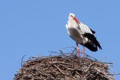 Storch auf seinem Nest lizenzfreies stockbild