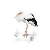 Storch auf Weiß Stockfoto